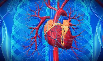 Arterias 3