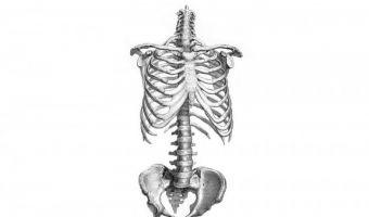 Esqueleto 3