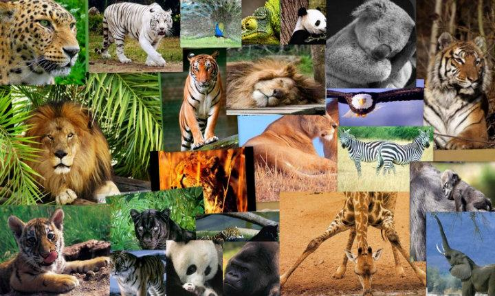 Animales_Silvestres