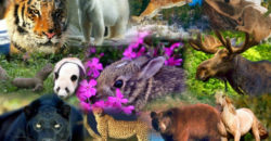 Animales Silvestres 4