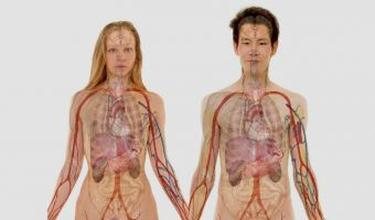 Anatomía 2