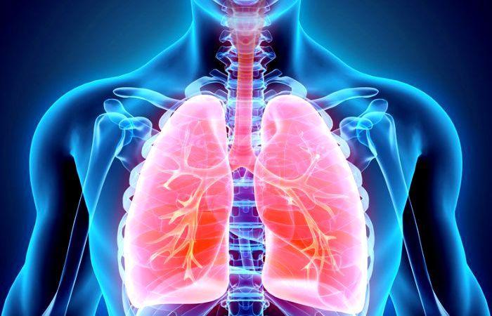 Qué Es Sistema Respiratorio Su Definición Y Significado 2021