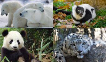 Animales en Peligro de Extinción 1