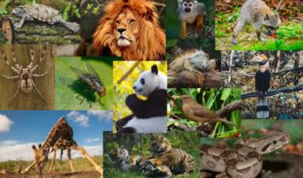 Animales Silvestres 2